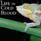 Life In Cold Blood: Dragons of the Dry